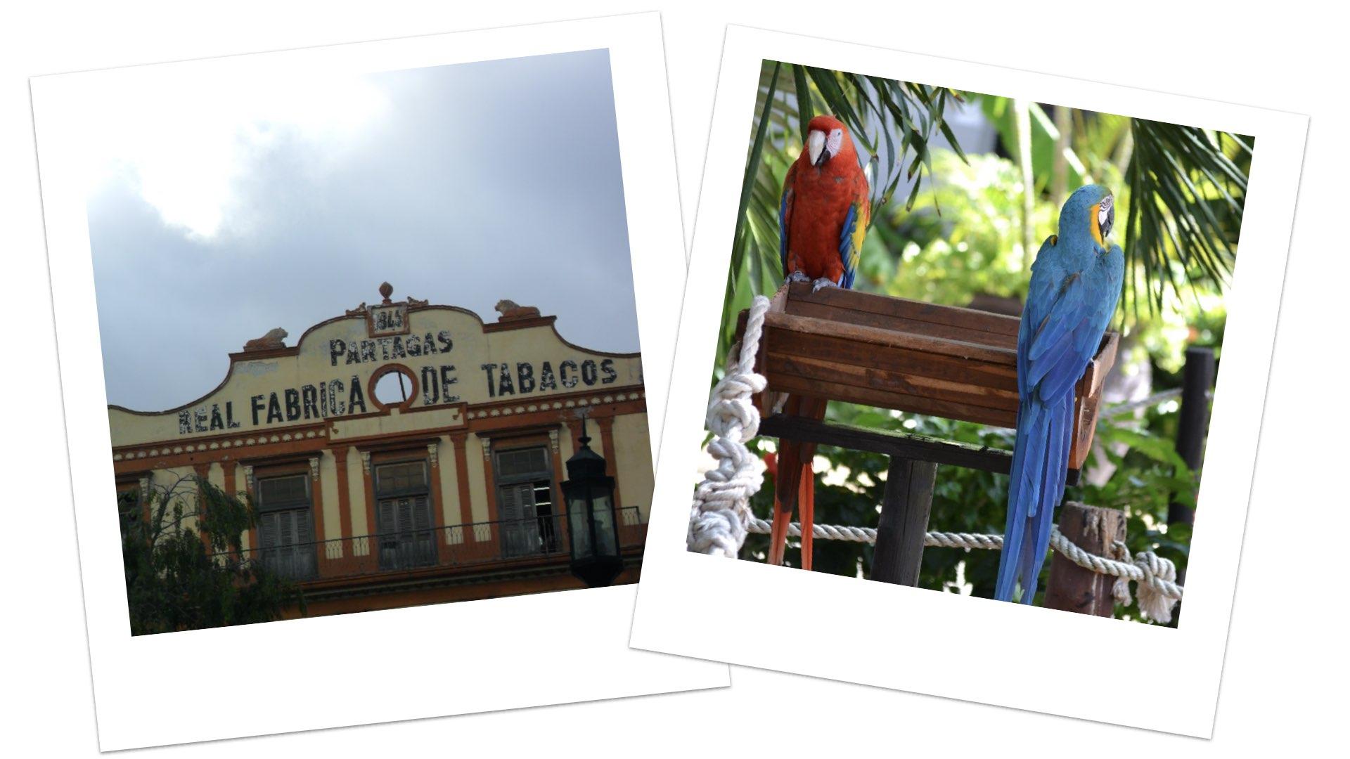 viaggio a Cuba_Maurizio ferro-b