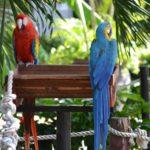Il mio viaggio a Cuba... L'Avana